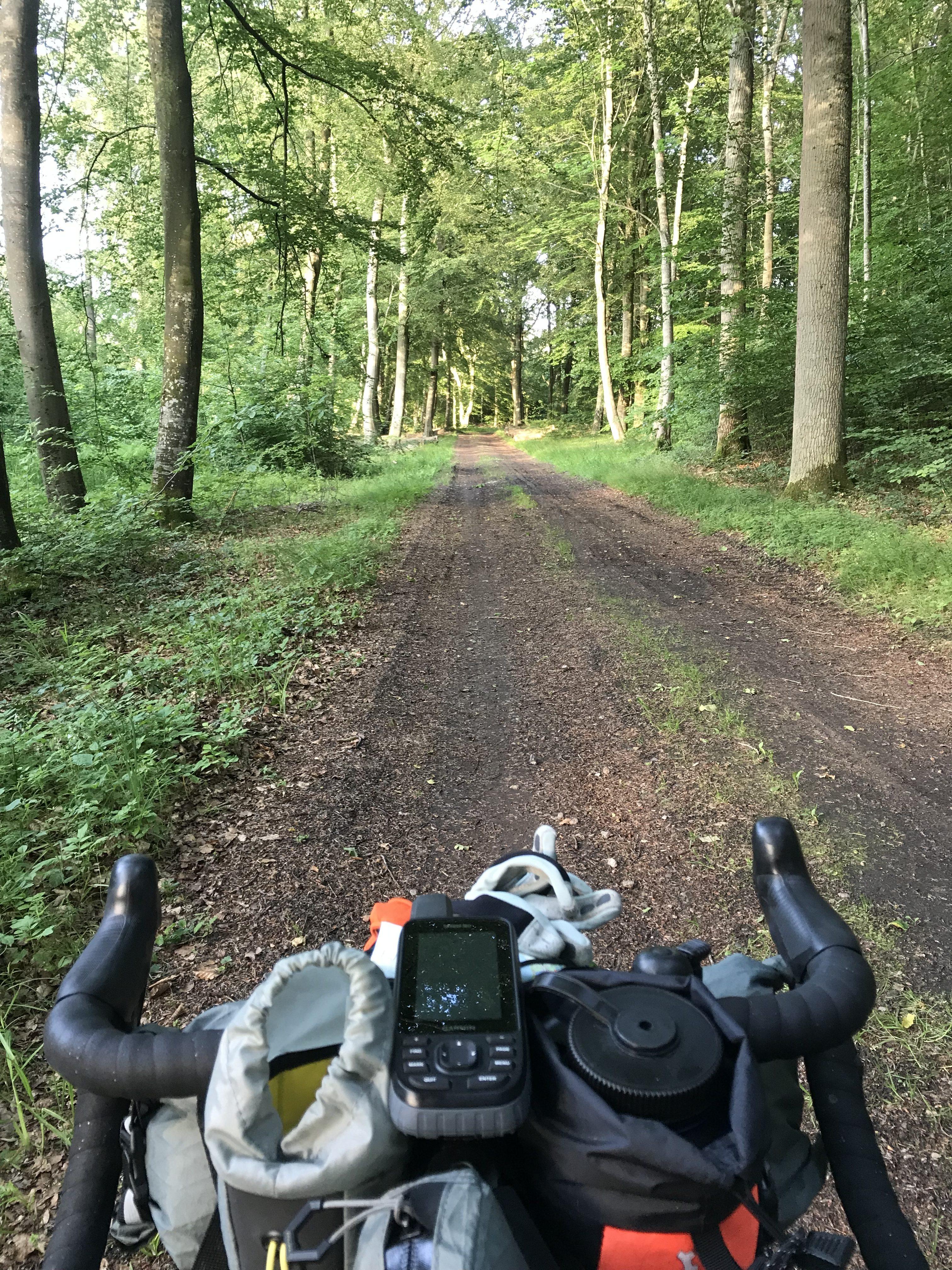 Turen gennem Gribskov foregår primært på større skovveje med enkelte lidt mere udfordrende passager indlagt.