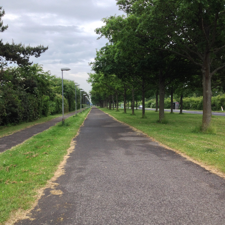 God bred cykelsti med allé træer på den ene side og lave parcelhuse på den anden side.