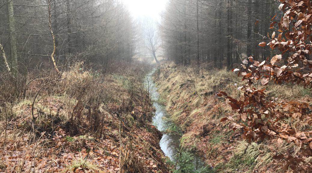 Häckeberga Runt - en diset morgen på Skåneleden